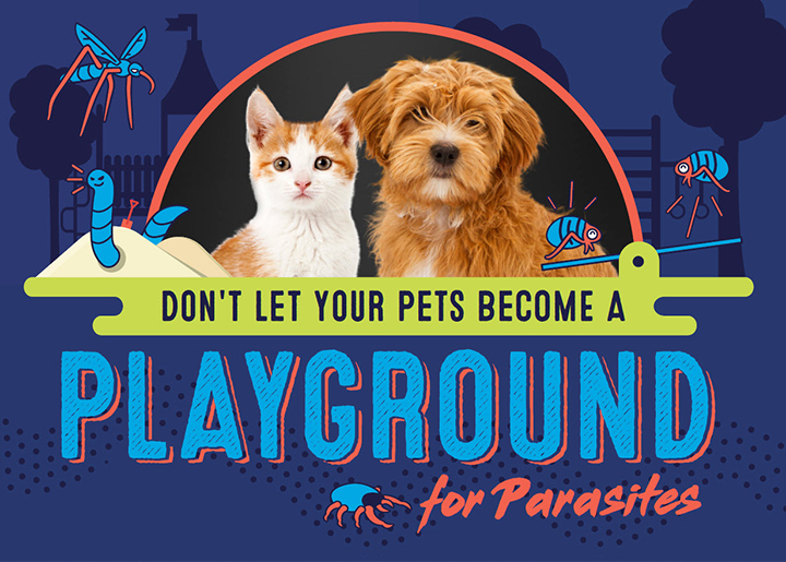 cat and dog playground for parasites image
